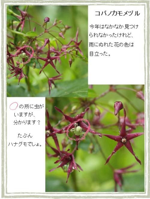 カモメヅルる-500-7T.jpg