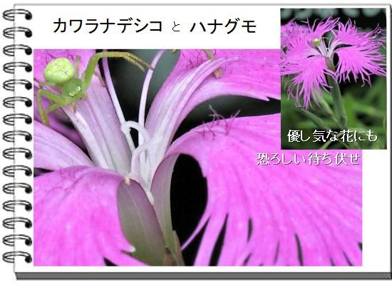 カワラ-550-4T.jpg