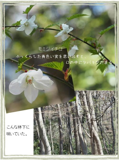 キイチゴ-500-3T.jpg