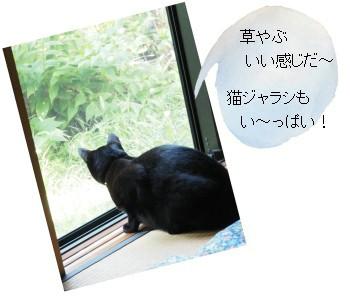 クロと草やぶ-350-3T.jpg