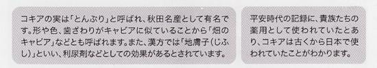 コキアー550.jpg