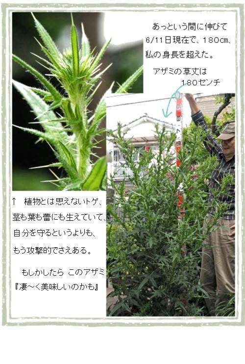 ソクテイ-16T.jpg