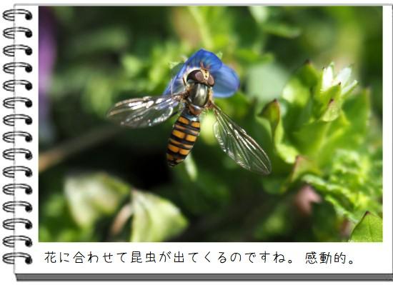 ハチが蜜-550-2T.jpg