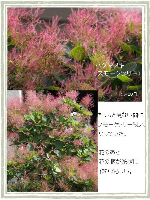 ピンクのスモーク-500-9T.jpg