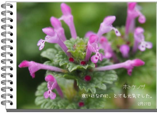 ホトケ-550-2T.jpg