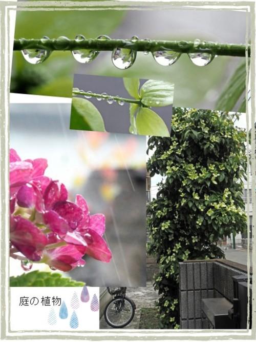 庭の植物-500.jpg