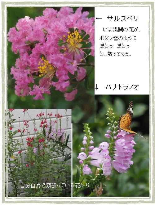 庭の花-500-5T.jpg