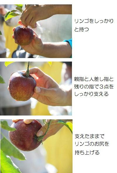摘み取り-3T.jpg