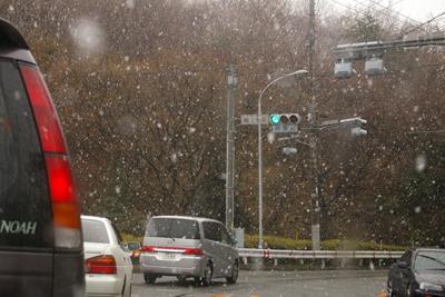河津桜 (268)-400.jpg