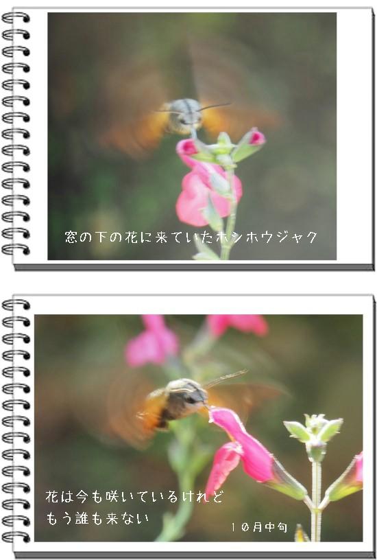 秋草草-550-5T.jpg